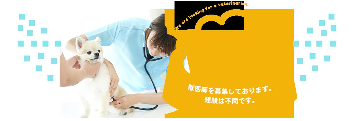 獣医師を募集しております。経験は不問です。